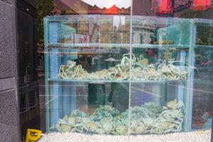 Leben Meerestiere im Restaurant zum essen