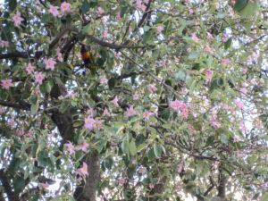 Lori im Baum (Allfarblori)