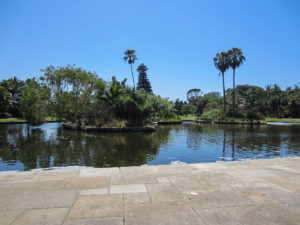 Royal Botanic Garden Sydney - Teich mit Fischen
