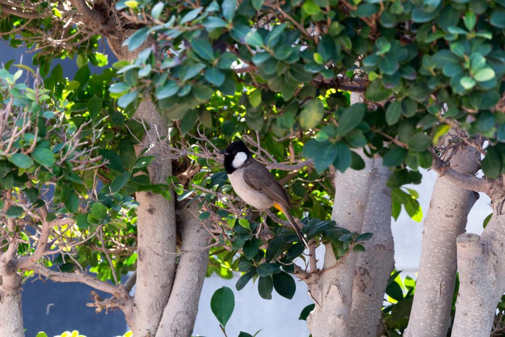 Vogel versteckt sich im Baum