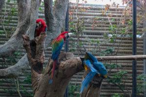 Papageien im Loro Parque